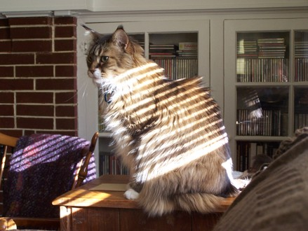 Striped_sunlight