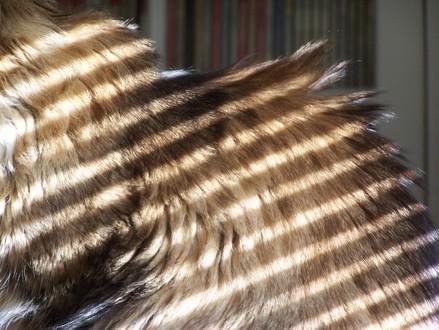 Striped_sunlight2