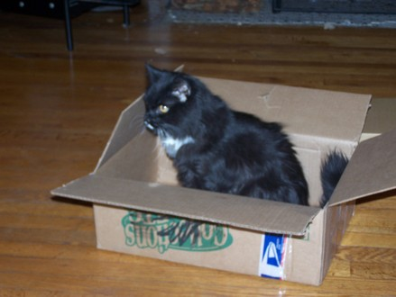 Ivy_in_box