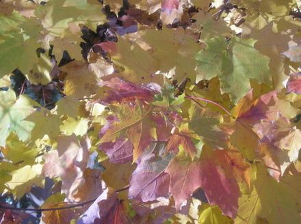Autumnleaves_closeup