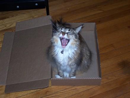 Boxseries_yawn
