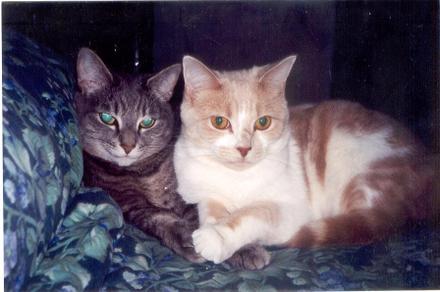 Cat_duo