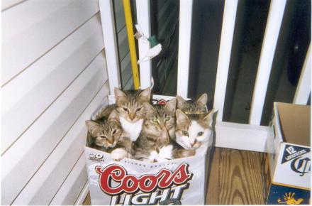 Cats_in_box