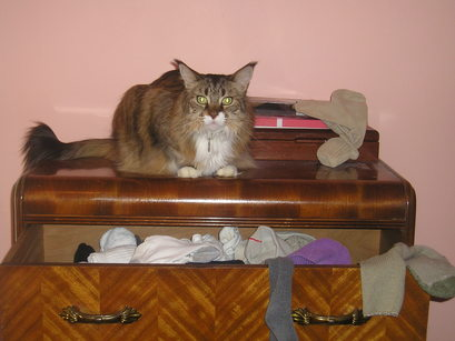 Dresser7