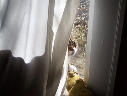 In_window2