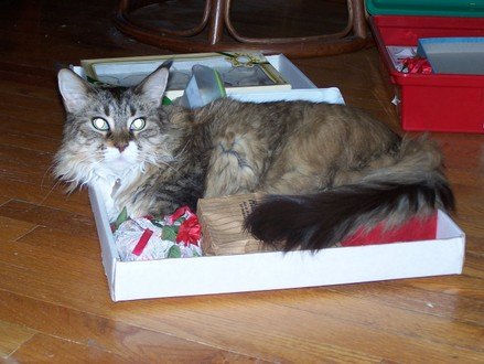 Maddie_ornament_box