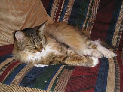 Sleepycat